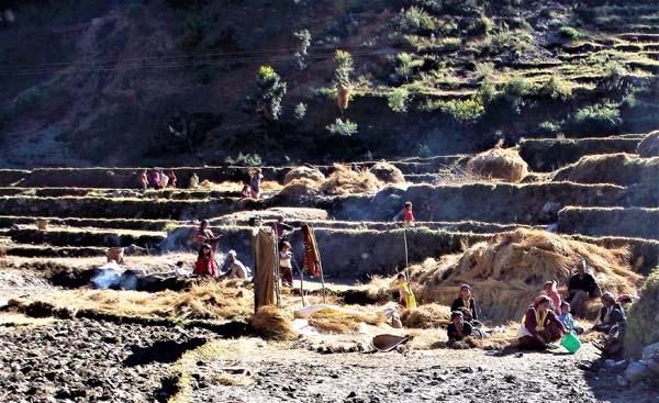 Harvest in Far West Nepal
